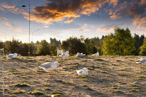Photo sur Aluminium Kaki empty ground with many bird in new zealand country