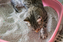 Toilet Cat Cleaning Sand Cat  ...