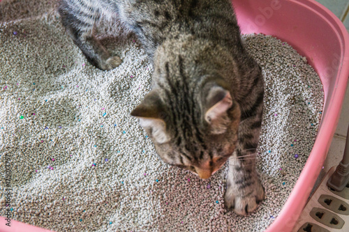 Photographie  toilet cat Cleaning sand cat  in a litter box