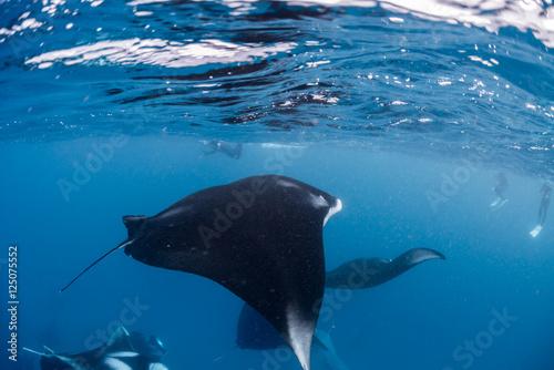 In de dag Dolfijn Manta Rays in Hanifaru bay