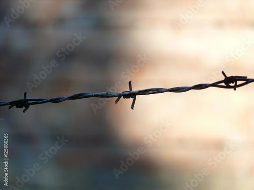 Barb wire Fototapet