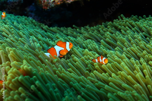 nurkowanie-koralowe-zycie-indonezja-ocean-morski