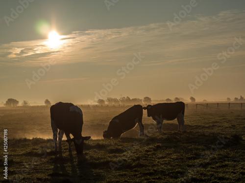 Spoed Foto op Canvas Kühe im Frühnebel