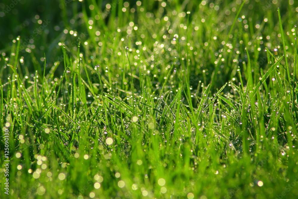 Fototapeta trawa w deszczu