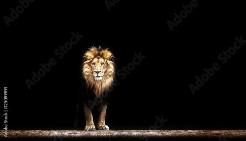 Recess Fitting Lion Portrait of a Beautiful lion, lion in the dark