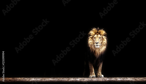 Photo  Portrait of a Beautiful lion, lion in the dark