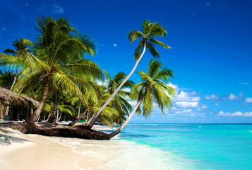 Panel Szklany Podświetlane Do pokoju Tropical beach in caribbean sea, Saona island, Dominican Republic