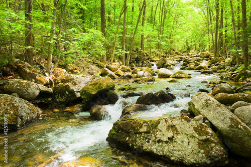Aluminium Prints Forest river fall forest stream Smolny in russian primorye reserve
