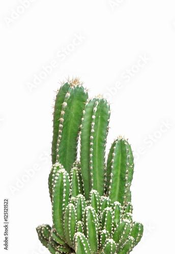 Photo  Cactus isolated on white background