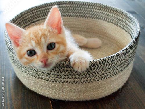 Keuken foto achterwand Kat 猫コレクション