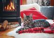 Leinwandbild Motiv cat relaxing beside fireplace