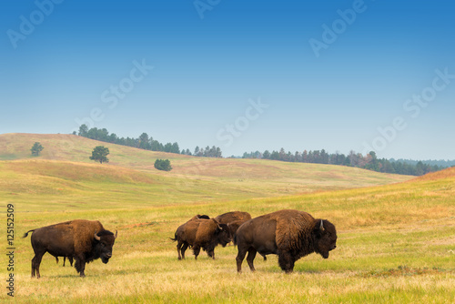 Deurstickers Buffel Herd of Buffalo