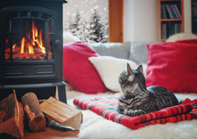 Cat Relaxing Beside Fireplace Watching Snowflakes Outside The Wi