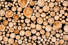 Logs Of Trees