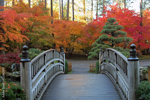 Fototapety, obrazy: Wooden Bridge Leading to Red and Gold Autumn Trees