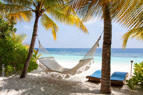 Fotografia  Maldive amaca tra le palme