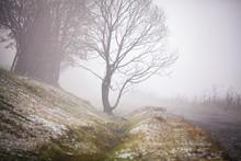 First Autumn Snow On Mountain Misty Road