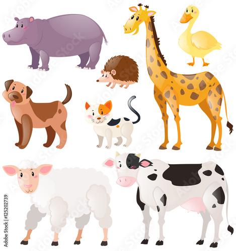 Set of wild animals #125202739