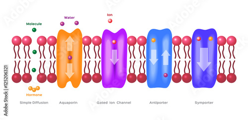 Mechanisms for the transport of ions and molecules across cell ...