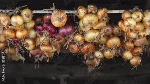 Photo  Cosecha de cebollas colgadas secando.