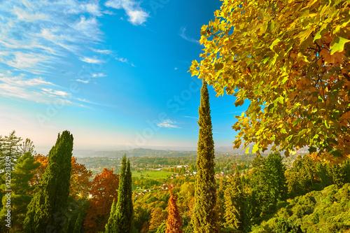 Cuadros en Lienzo Sentiero con alberi autunnali