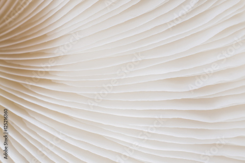 Foto op Canvas Macrofotografie abstract background macro image of mushroom, Sajor-caju Mushroom