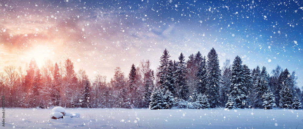 Fototapety, obrazy: Beautiful tree in winter landscape in late evening in snowfall