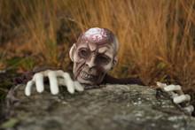 Zombie Im Moor