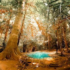 Fototapeta Las Fantasy jangle landscape with turquoise pond water at deep tropical rain forest. Concept for mysterious nature background