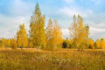 FototapetaThe image of an autumn forest