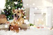 Cute puppy lying on Christmas gifts against blurred cozy interior background. Snowy effect, Christmas celebration concept.
