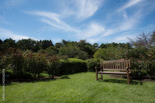 Fotobehang Tuin ガーデン チェア / Garden Chair