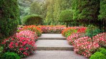 Natural Garden Views