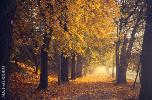 Canvas Prints Honey Autumn colorful tree alley in the park on a sunny day in Krakow, Poland