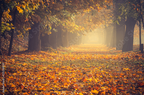 Obraz Autumn colorful tree alley in the park on a sunny day in Krakow, Poland - fototapety do salonu
