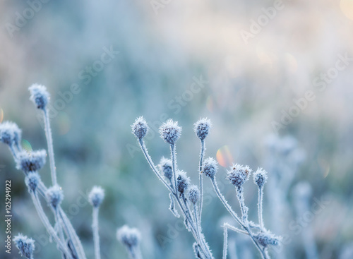 Vászonkép abstract natural background from frozen plant covered with hoarfrost or rime