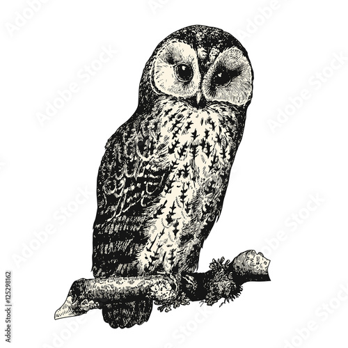 Spoed Foto op Canvas Uilen cartoon vintage bird engraving / drawing: owl - retro vector design element