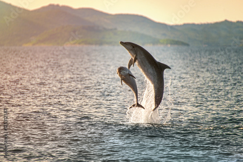 Spoed Foto op Canvas Dolfijn Doplhin jumping near coast in Croatia