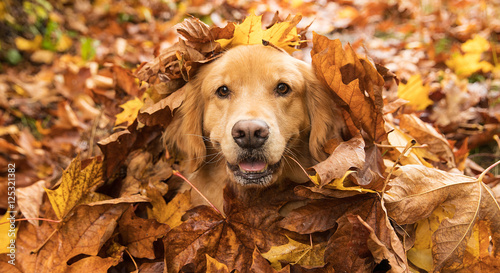 Fotobehang Hond Golden Retriever Dog in a pile of Fall leaves