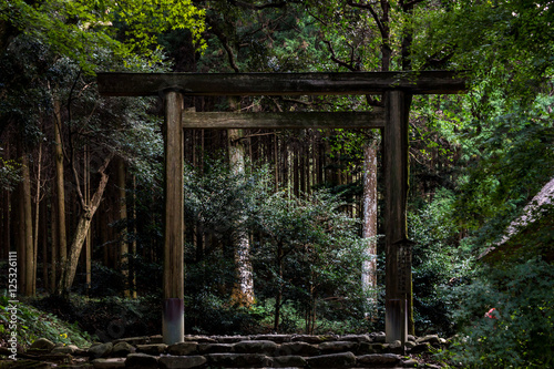 Torii gate in the forest