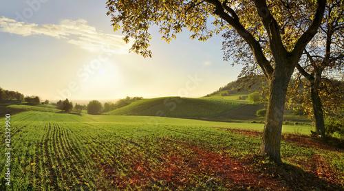 Papiers peints Vignoble Landschaft im Herbst