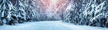 Winter Panorama On The Road Through Coniferous Forest