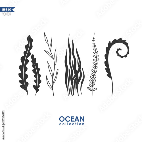 Fotografie, Obraz sea plants and seaweed isolated on white, vector oceanic plants