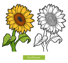 Coloring Book, Flower Sunflower