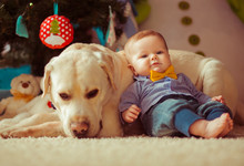 The Small Baby With Dog Lie On The Carpet