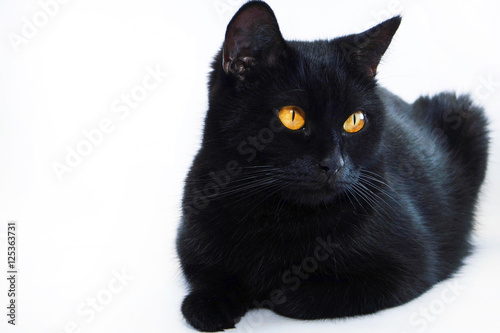 Photo  Black cat. Very beautiful cat.