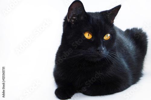 Photo  Black cat. Very beautiful cat.