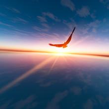 Eagle Against Horizon Sun