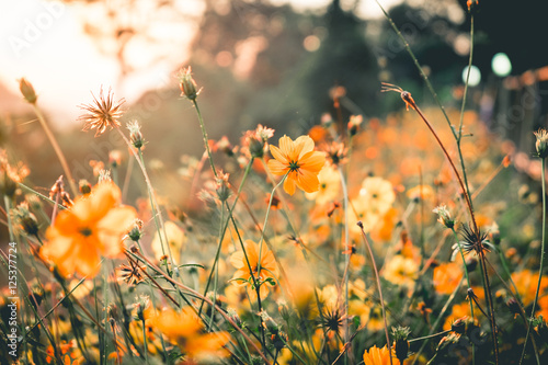 Foto  Yellow flower nature in the morning.Vantage or retro tone.
