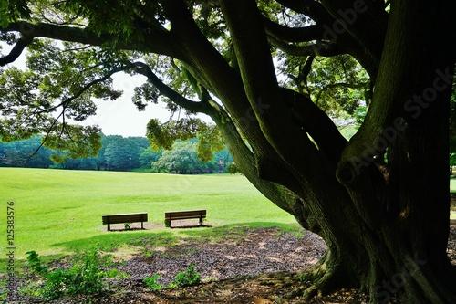 Fotografie, Obraz  公園のベンチ